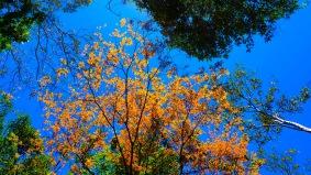 photo-10-10-2016-13-24-13