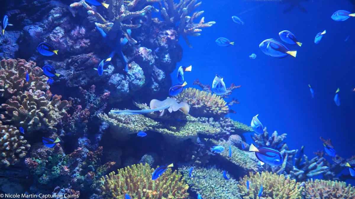 The Cairns Aquarium-How does it compare to Townsville?